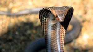 dünyanın en tehlikeli canlıları